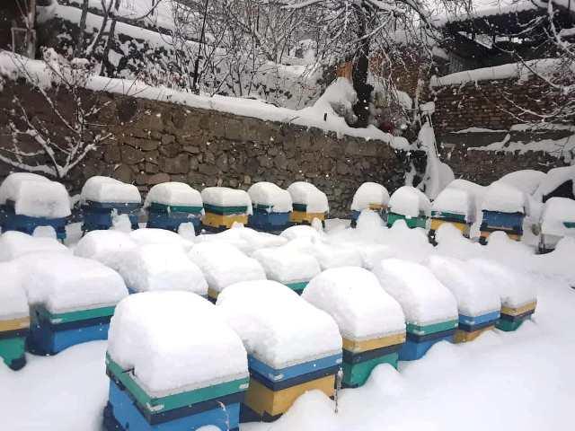 زنبورستان مدرس دوره در زمستان گذشته